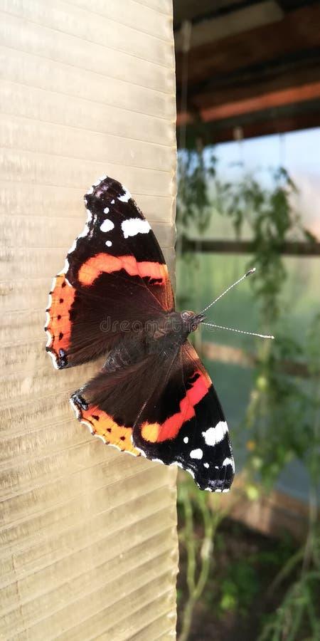 蝴蝶决定休息 库存照片
