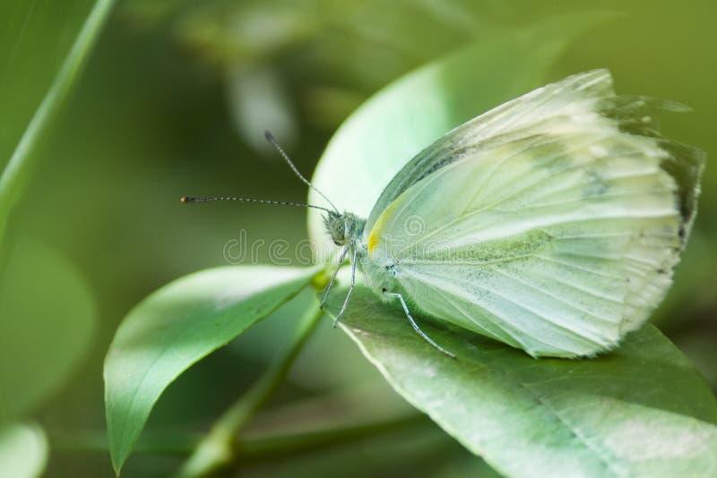 蝴蝶和叶子,hd蝴蝶 免版税图库摄影