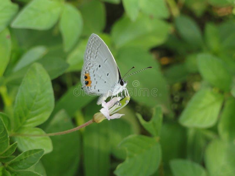 蝴蝶和叶子 库存照片