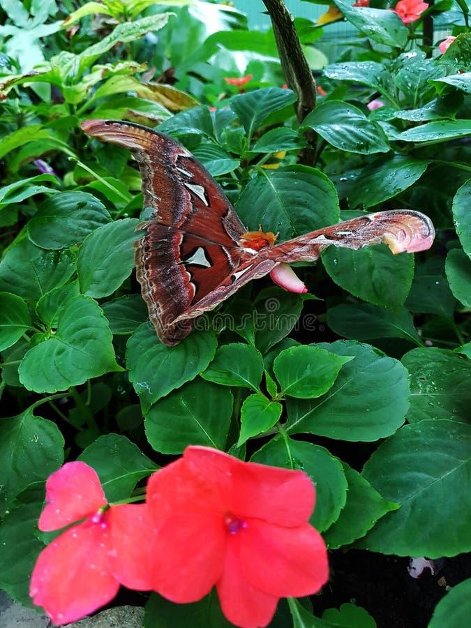 蝴蝶和桃红色花 免版税库存照片