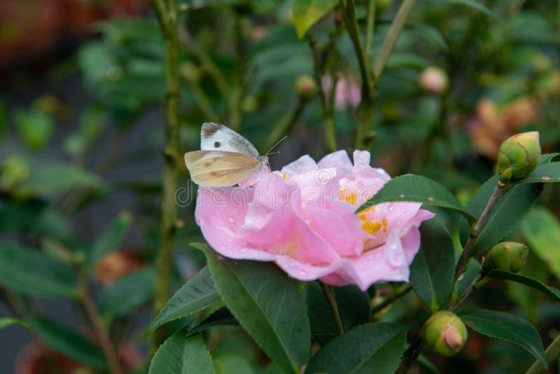 蝴蝶和花互相补全 库存照片