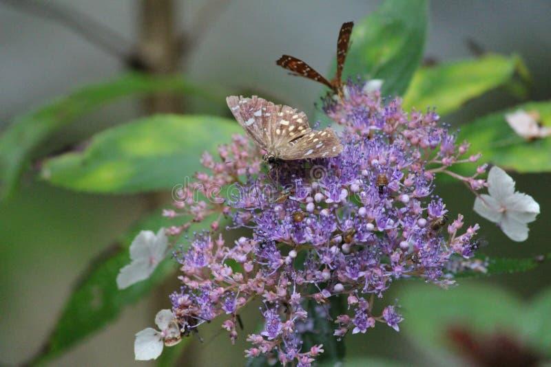 蝴蝶和花在重庆 库存照片