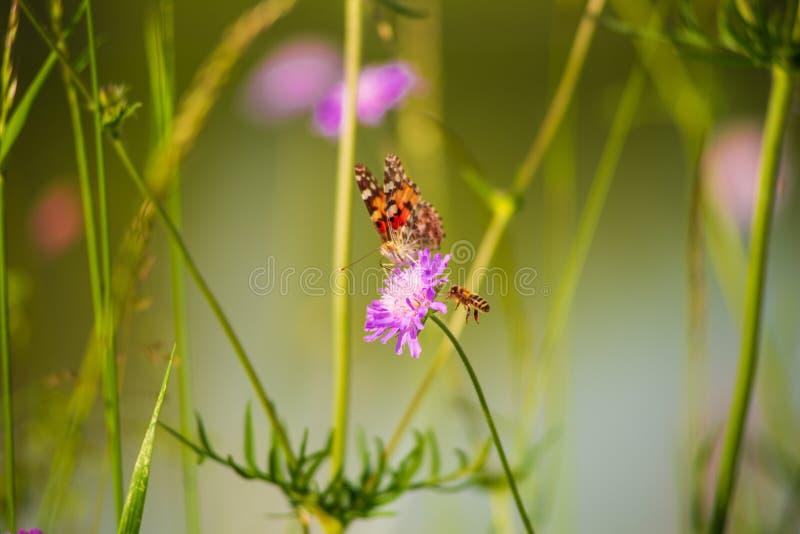 蝴蝶和蜜蜂接近的花 免版税库存照片