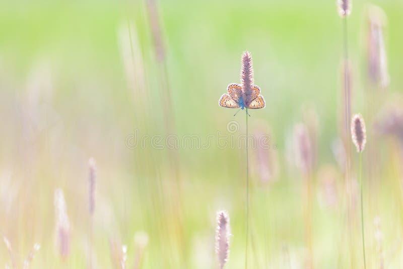 蝴蝶在一个晴朗的早晨 免版税库存照片