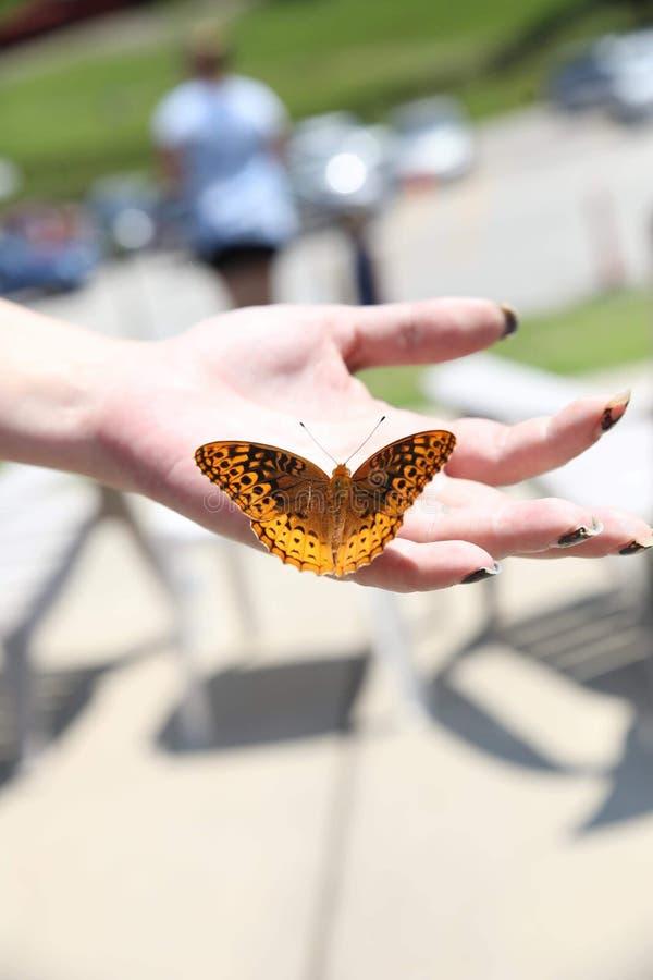 蝴蝶在手边 库存图片