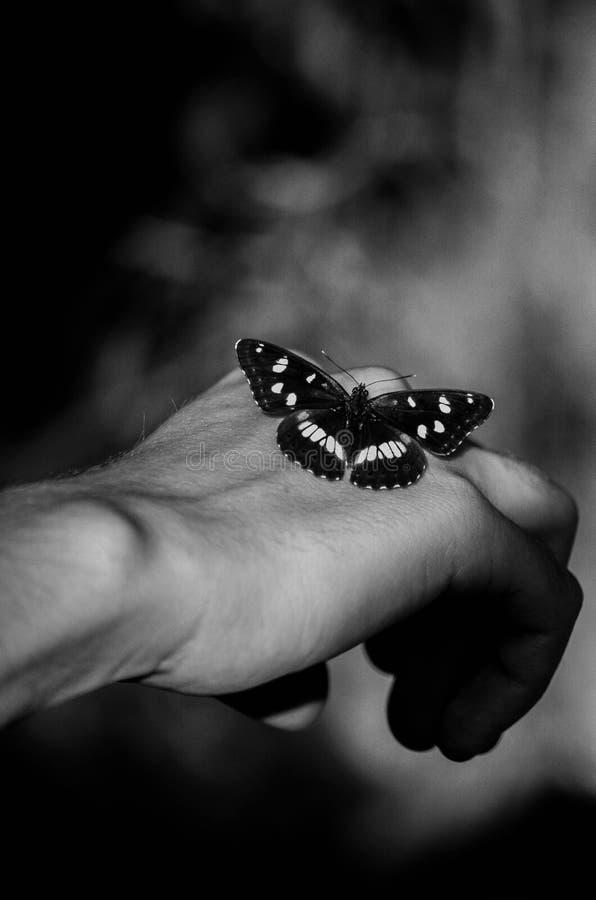 蝴蝶在模型的手上 免版税库存图片