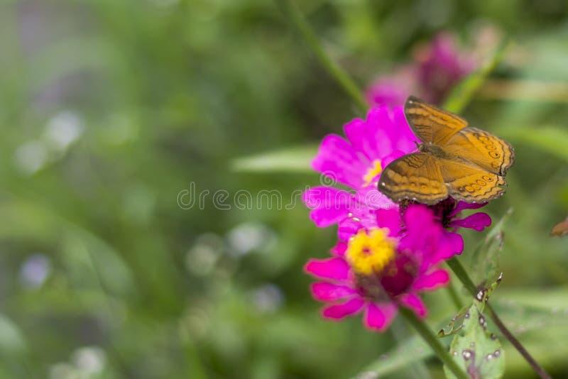 蝴蝶在花园里 免版税图库摄影