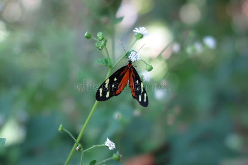 蝴蝶在雨林里 免版税库存图片