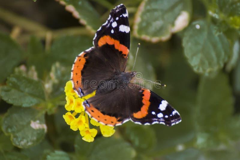 蝴蝶坐花 免版税图库摄影