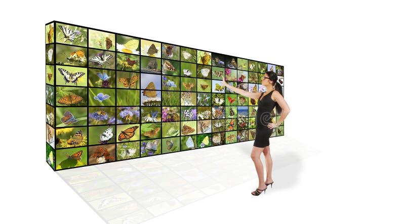 蝴蝶墙壁 库存图片