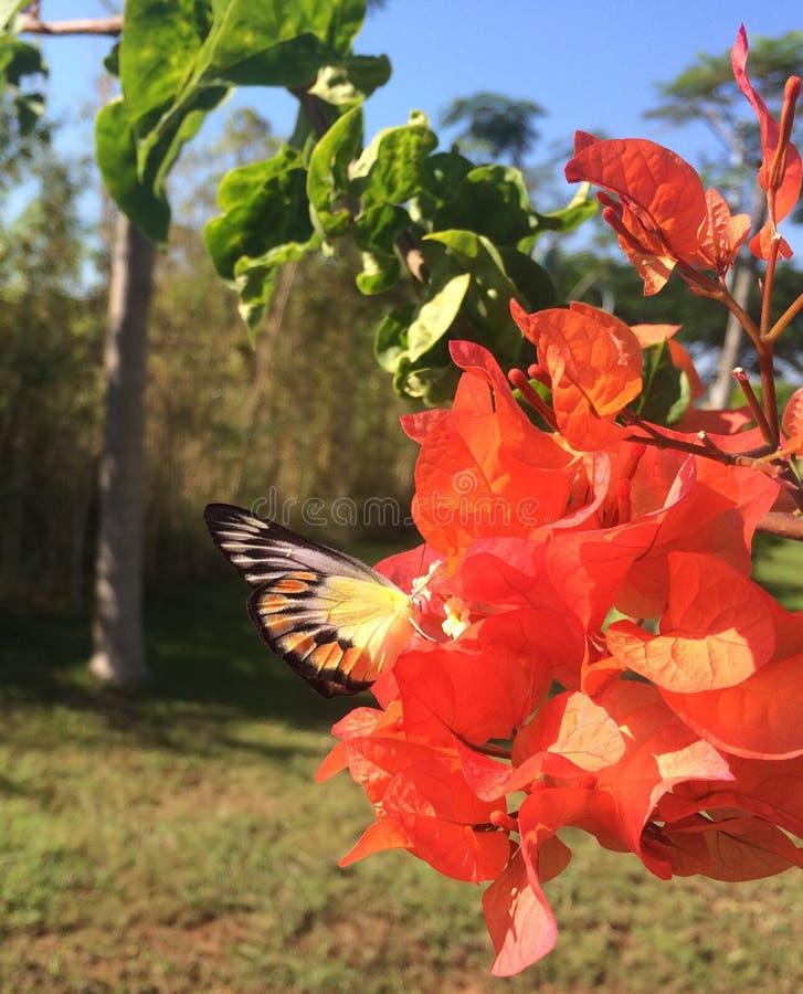 蝴蝶寻找花 免版税图库摄影
