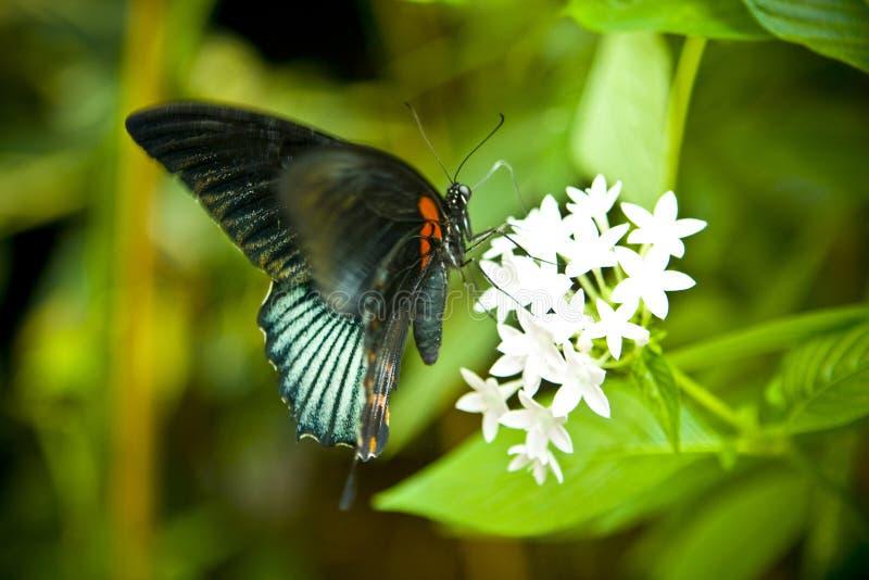 蝴蝶尾标 库存图片