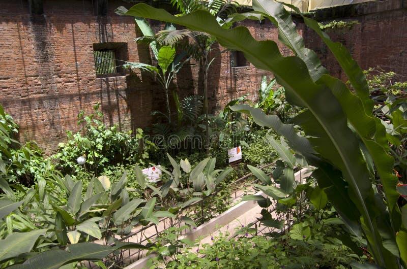 蝴蝶庭院在哥斯达黎加的国家博物馆 图库摄影