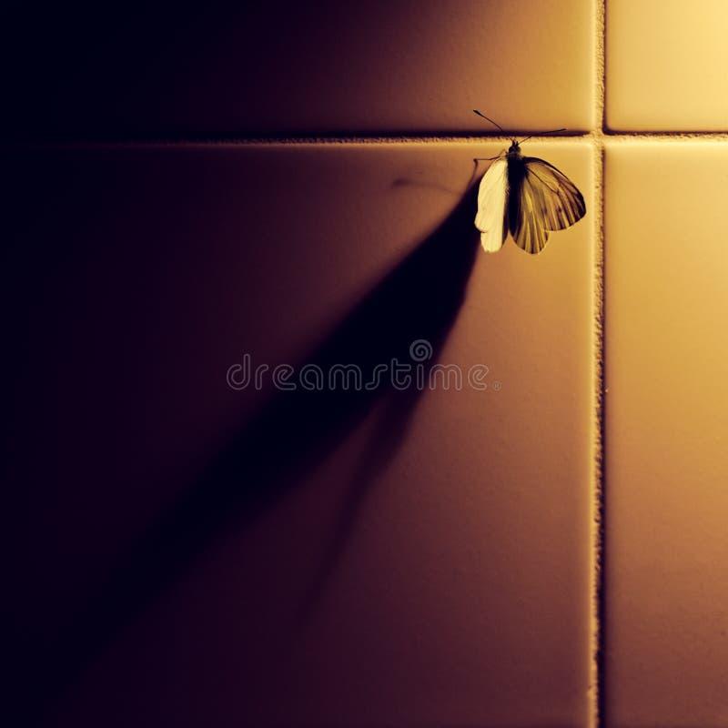 蝴蝶影子 库存图片