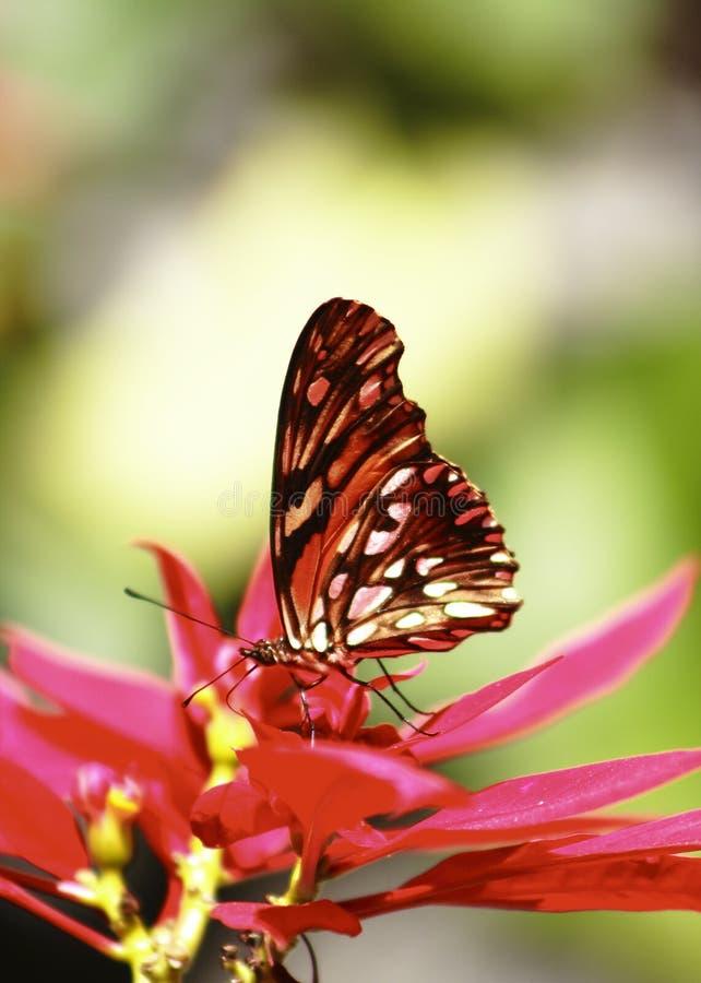 蝴蝶我 库存照片