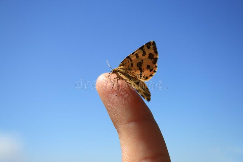蝴蝶手指 库存照片
