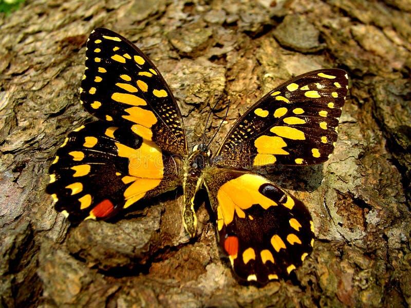 蝴蝶接近  免版税图库摄影