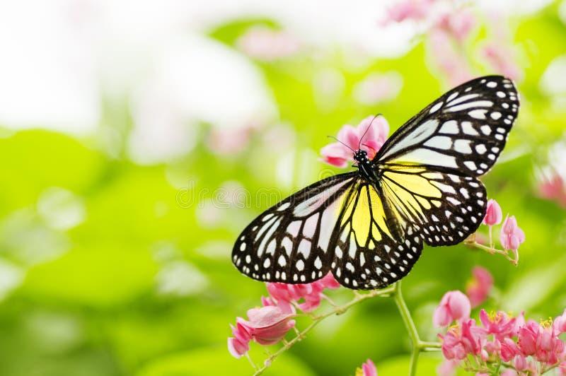 蝴蝶提供的花 免版税库存图片