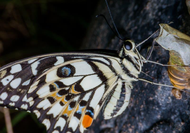 蝴蝶是帮助授粉花的昆虫 库存图片