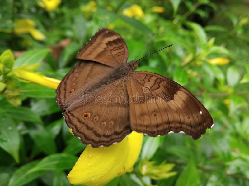 蝴蝶是爱 库存图片