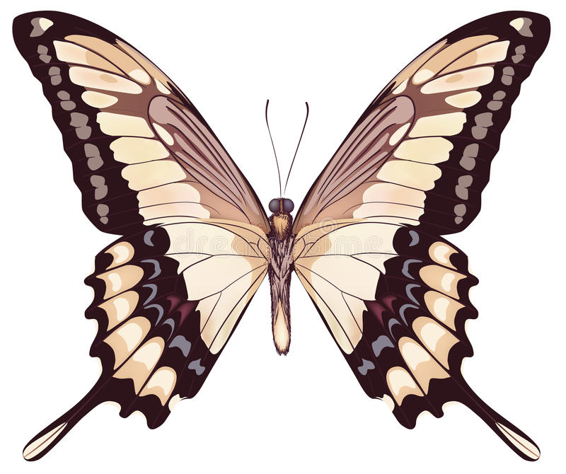 蝴蝶查出的光 皇族释放例证