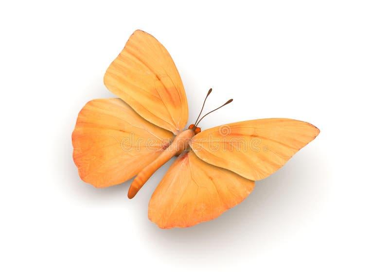 蝴蝶查出的桔子 库存例证