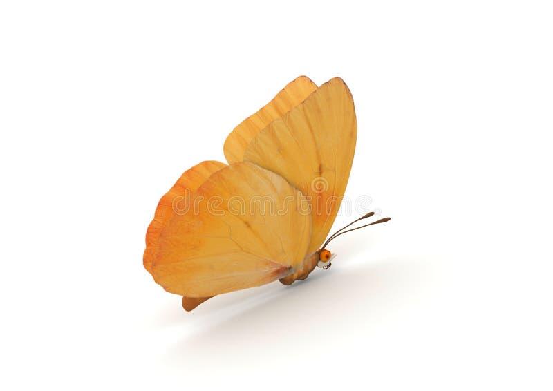 蝴蝶查出的桔子 皇族释放例证