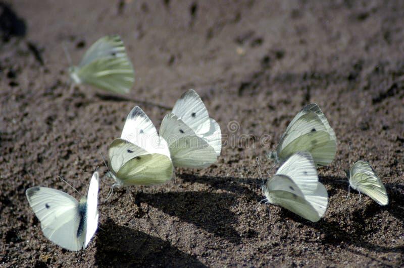 蝴蝶沙子 库存照片