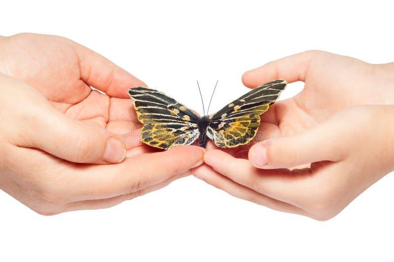 蝴蝶现有量发行 库存照片