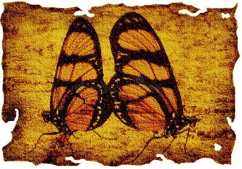 蝴蝶画布 库存图片
