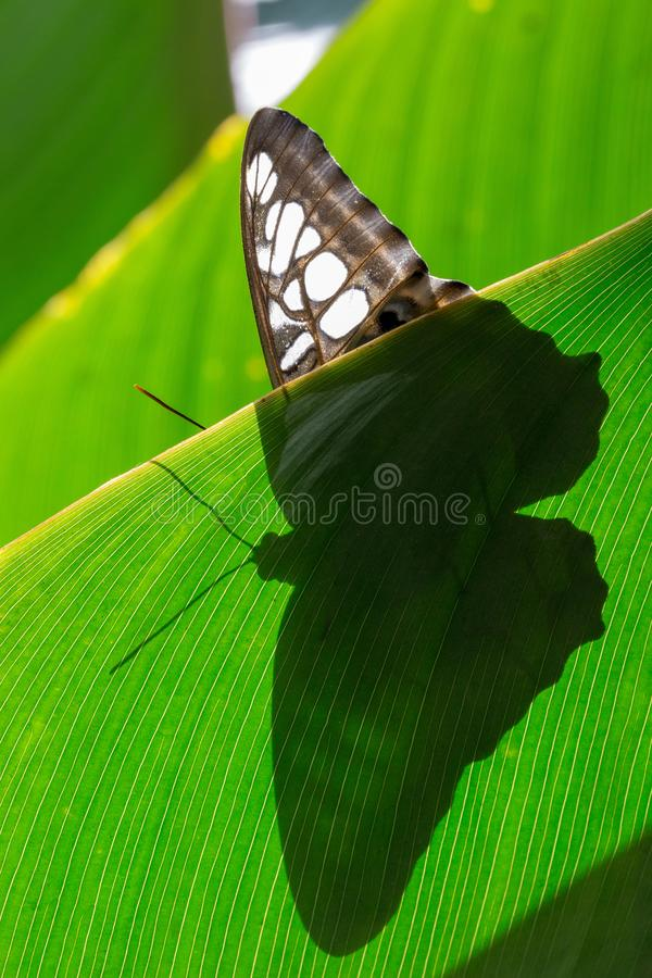 蝴蝶的剪影 免版税库存照片