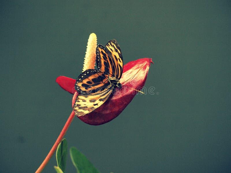 蝴蝶的长眠 库存照片