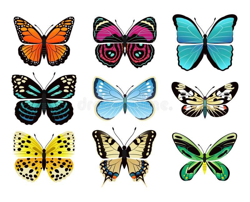 蝴蝶类型汇集传染媒介例证 向量例证