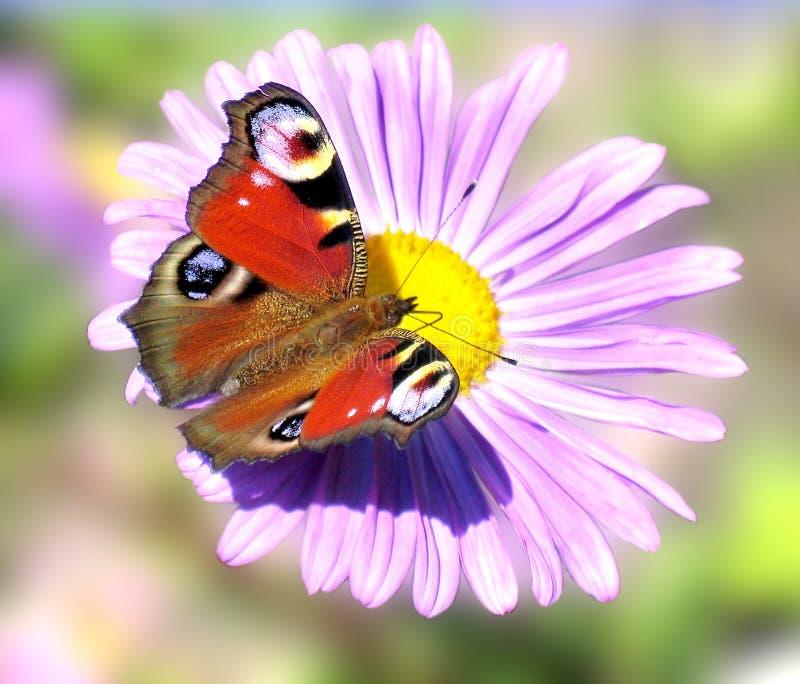 蝴蝶红色 免版税库存图片