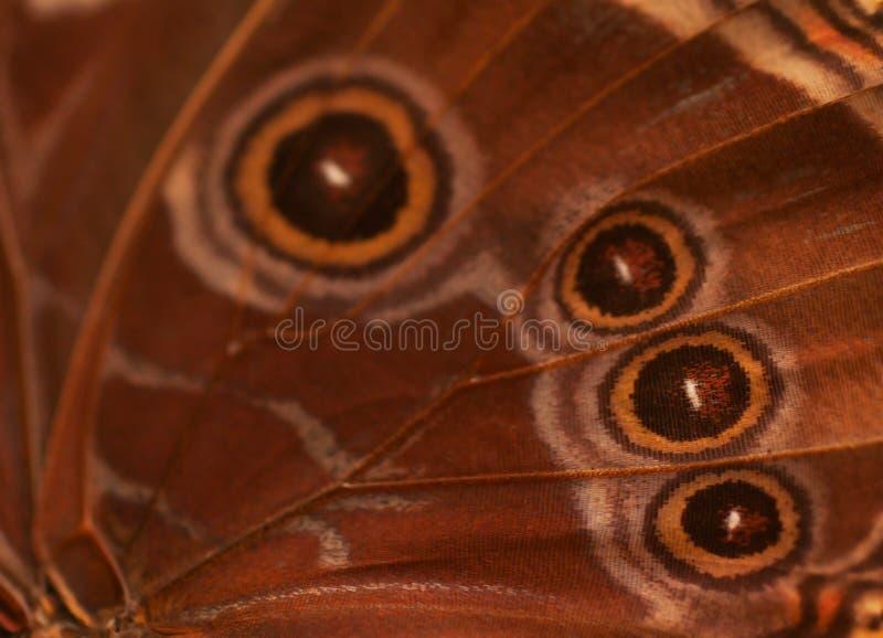 蝴蝶翼摘要背景 库存照片