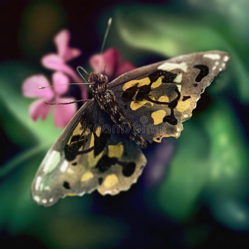 蝴蝶翼模式-数字式绘画 库存照片