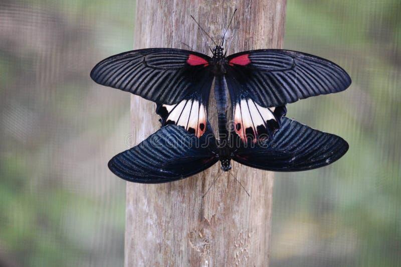 蝴蝶联接 库存图片