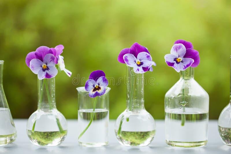 蝴蝶花在化工玻璃器皿,桌装饰开花在庭院里 免版税库存图片