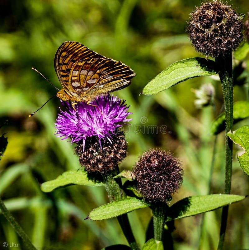 蝴蝶释放 免版税库存图片