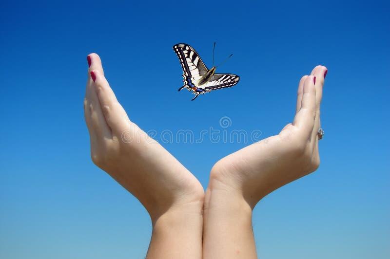 蝴蝶释放 免版税库存照片