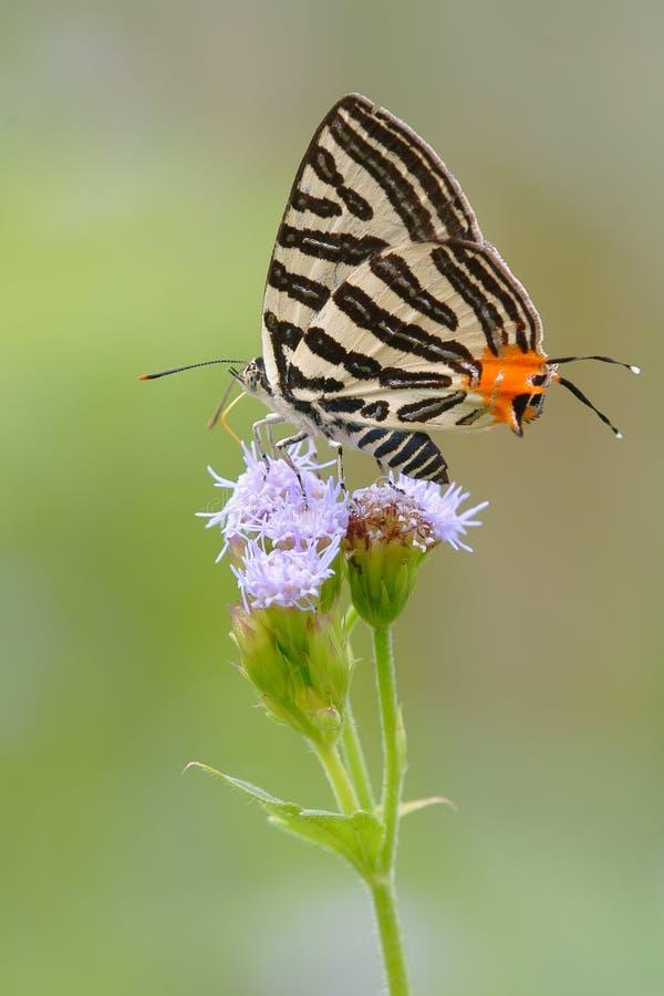 蝴蝶银色数据条 库存照片