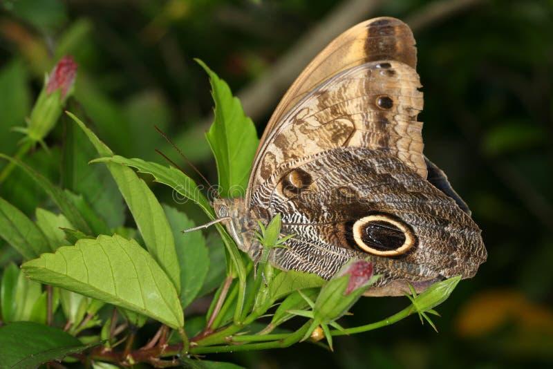 蝴蝶闭合的热带翼 免版税库存图片