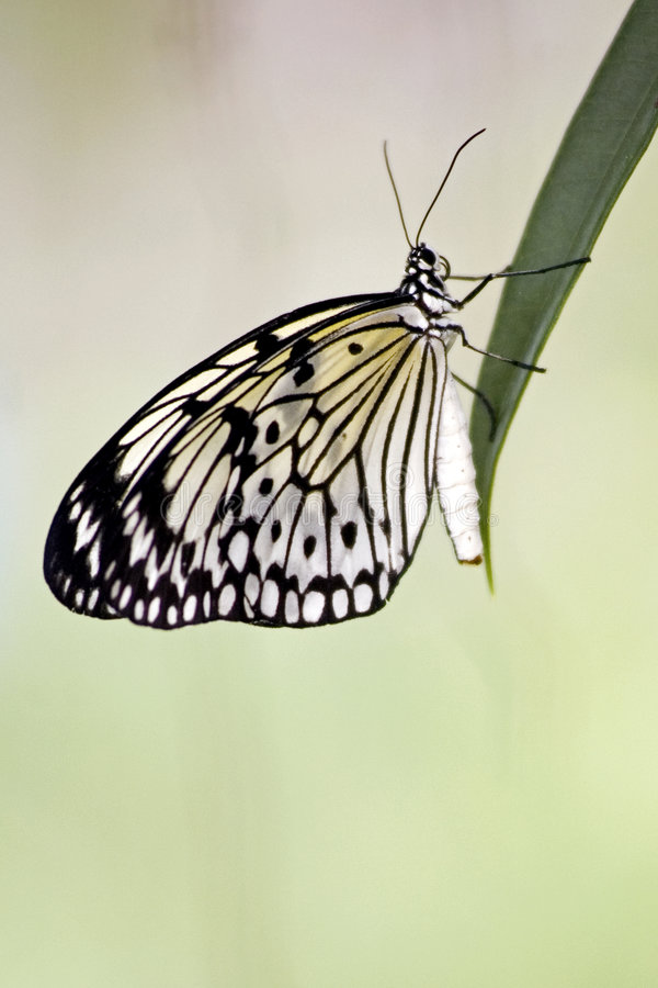 蝴蝶风筝纸张 库存照片