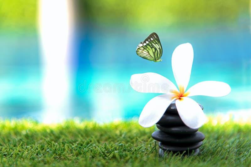 蝴蝶飞行在与岩石温泉的泰国温泉按摩附近的和羽毛花临近游泳池 泰国 健康的概念 库存图片
