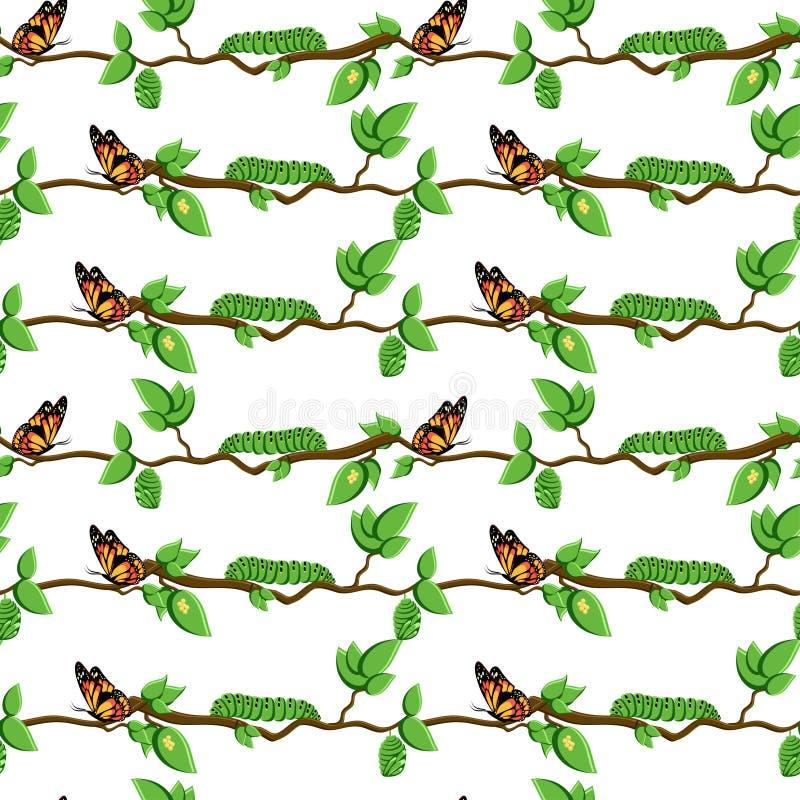 蝴蝶,变形无缝的样式的生命周期 库存例证