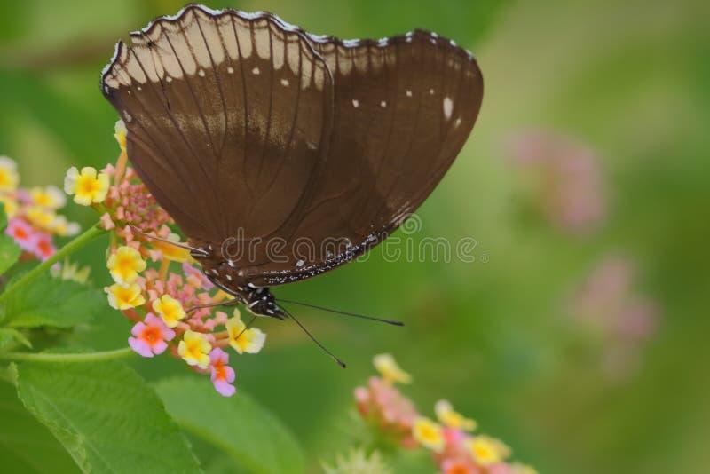 蝴蝶,野花 免版税库存照片
