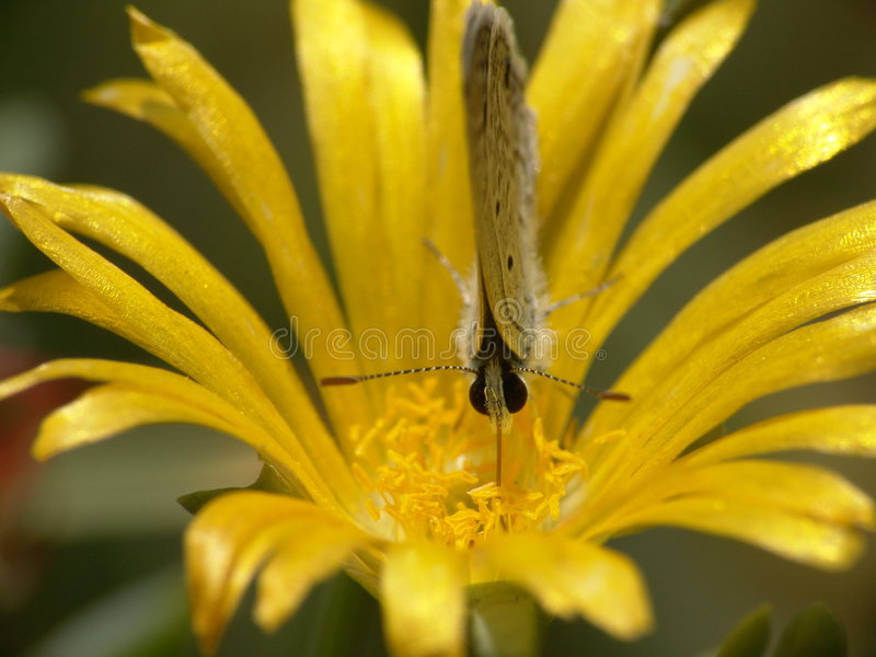 Download 蝴蝶 库存照片. 图片 包括有 工厂, 叶子, 本质, 关闭, 昆虫, 敌意, 黄色, 宏指令, 蝴蝶 - 184430