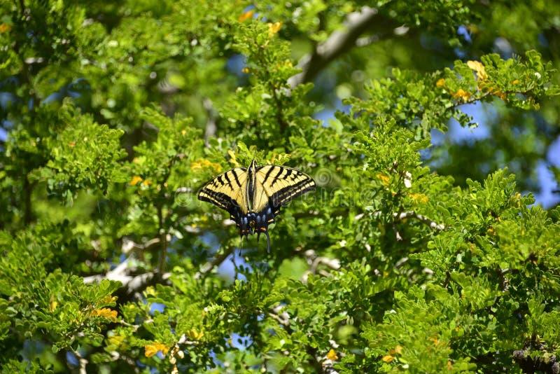 Download 蝴蝶 库存图片. 图片 包括有 象鼻, 叶子, 食物, 本质, 察觉, 蝴蝶, 黄色, 缩放比例, 幼虫 - 30331753