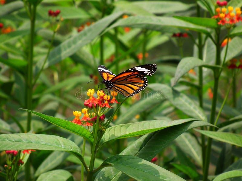 蝴蝶和自然 免版税库存照片