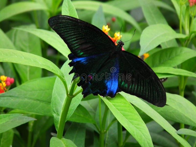 蝴蝶和自然8 库存照片